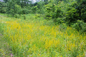 Photo by: Andrew Nelson - Rice Creek Field Sta., SUNY Oswego. Photo taken: Oswego Co., NY: 8 Jun 2010